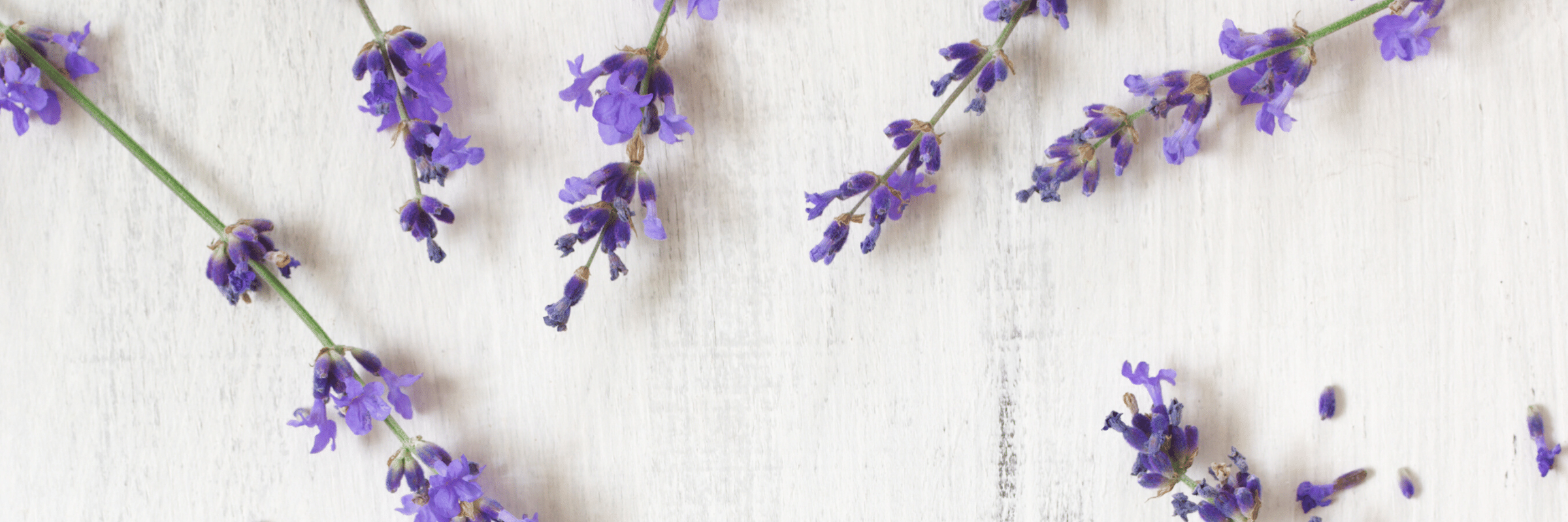 Design + Marketing by Jennifer Skondin: Lavender